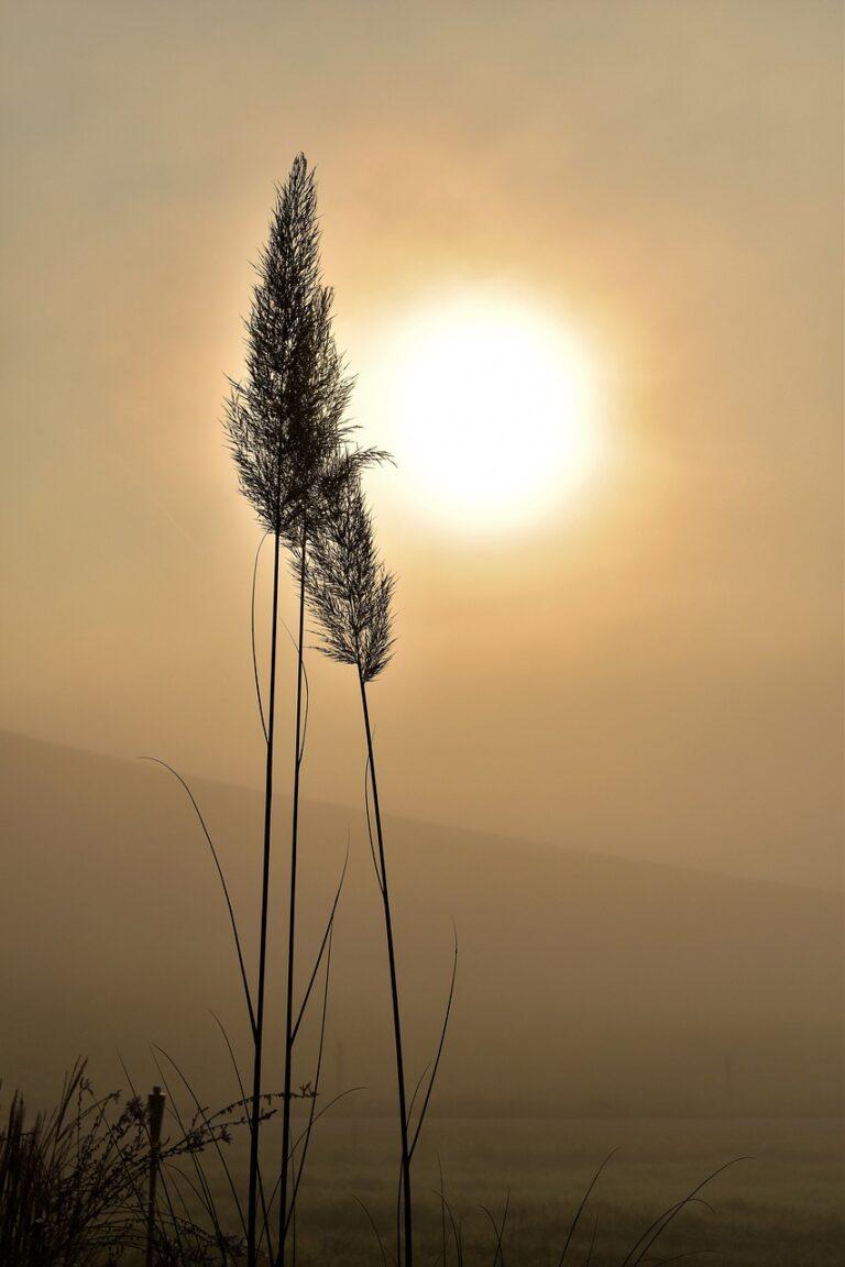grass, silhouette, sun-1694293.jpg